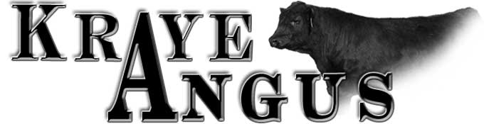 Kraye Angus Ranch
